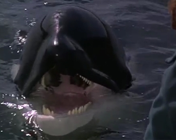 Sauvez Willy 2 - bande annonce - VO - (1995)