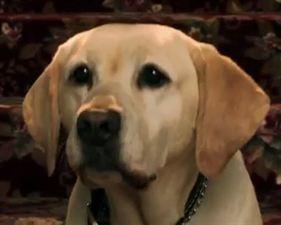 Le chien qui a sauvé Halloween - bande annonce - VO - (2011)