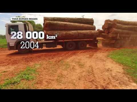 Amazon rainforest pays heavy price for Brazil's political crisis