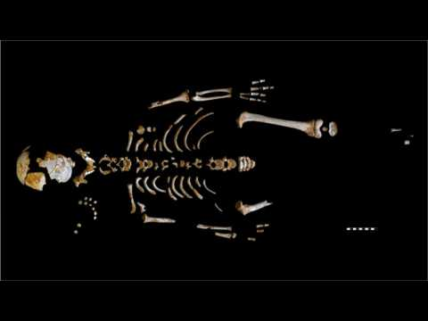 Exquisitely Preserved Neanderthal Skeleton of Child Found