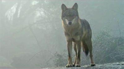 L'Enfant loup - bande annonce - VF - (2010)