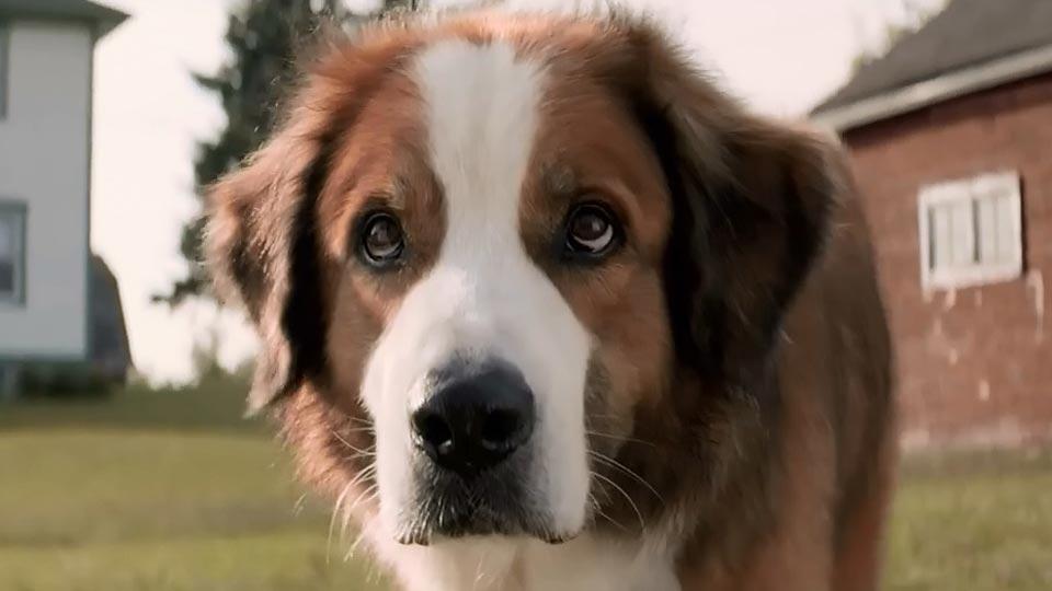 Mes vies de chien - bande annonce 2 - VF - (2017)