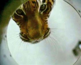 Dans l'oeil du tigre - bande annonce - VO - (2010)