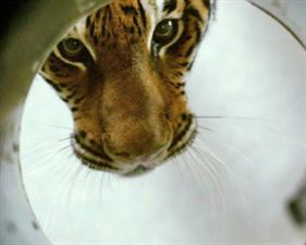 Dans l'oeil du tigre - bande annonce 2 - VF - (2010)