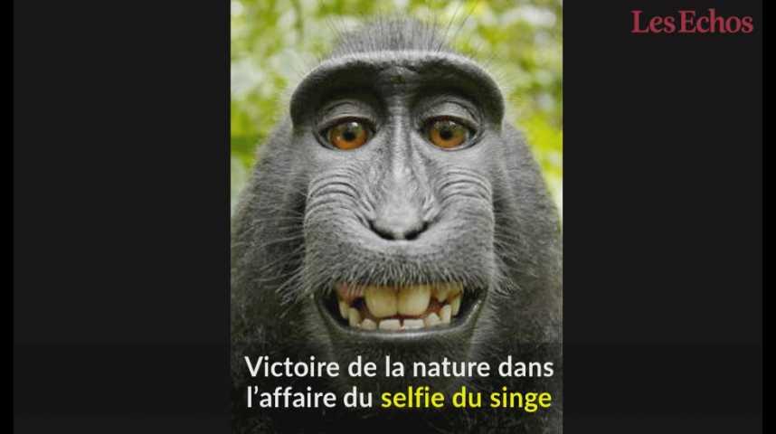 Illustration pour la vidéo Victoire de la nature dans l'affaire du selfie du singe