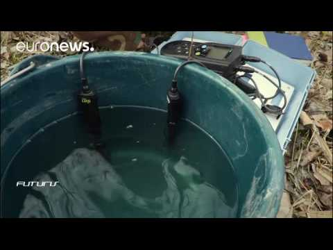 Testing the water: How to make fish farming more sustainable