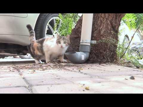 Feline hungry? Tubes installed to feed stray cats in Damascus
