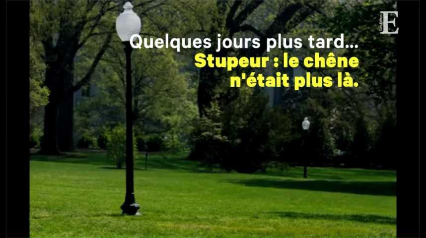 Illustration pour la vidéo Mais où est passé l'arbre planté par Trump et Macron ?