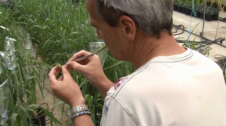 Gens des blés - Bande annonce 1 - VF - (2018)
