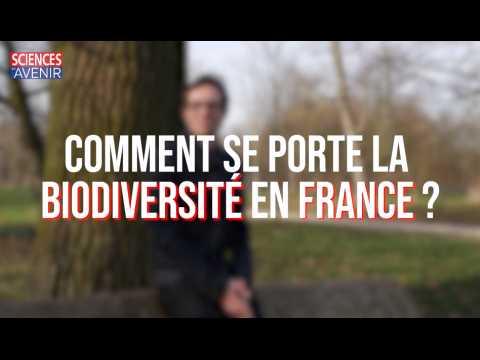 Rapport ONB : la France perd sa biodiversité