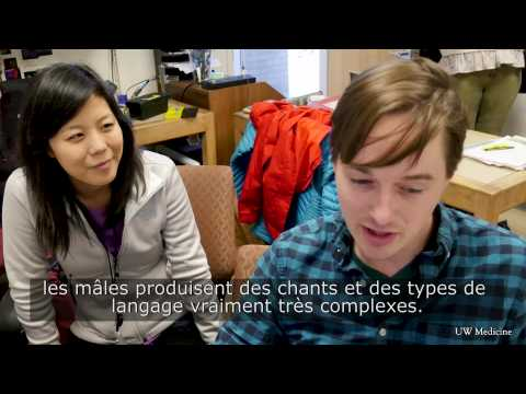 Une Intelligence artificielle décode le langage ultrason des souris