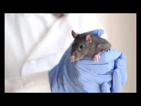 Quel cri émet un rat triste ?