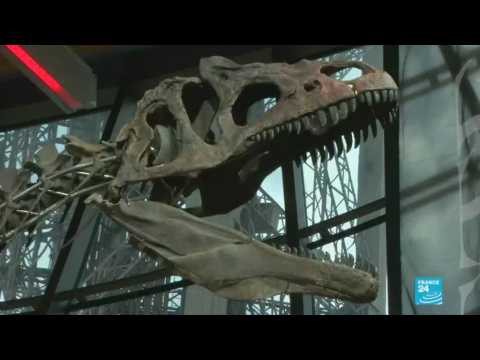 Rare dinosaur skeleton sells for €2 million at Eiffel Tower auction