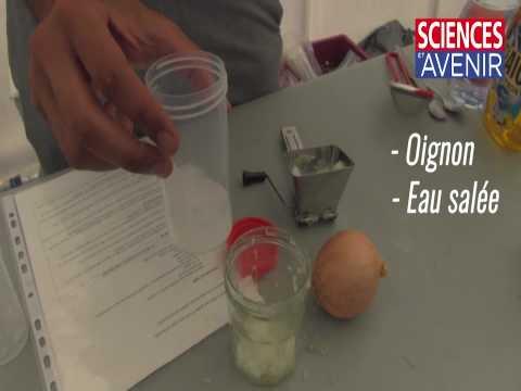 Comment extraire de l'ADN dans sa cuisine ? La recette