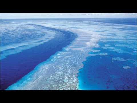 Belize Barrier Reef Removed From Danger List