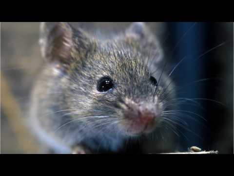 NASA Launches 20 Mice Into Space On SpaceX