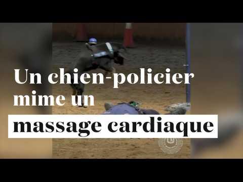 "Poncho, le ""chien policier"" qui mime le massage cardiaque"