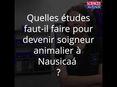 Quelles études faut-il faire pour devenir soigneur animalier à Nausicaá ?