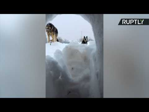 I Want to Break Free! Sakhalin Local Kick His Way Out of Snow-Covered House