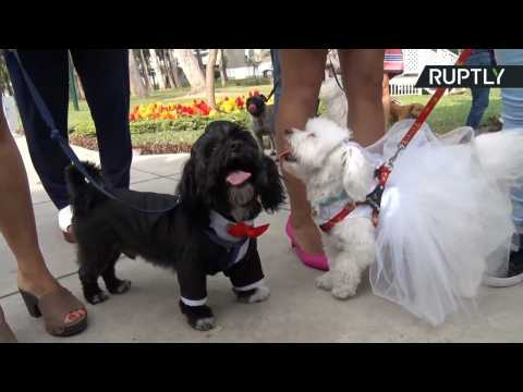 Get in the Mood for Valentine's Day with Adorable Group Pet Wedding