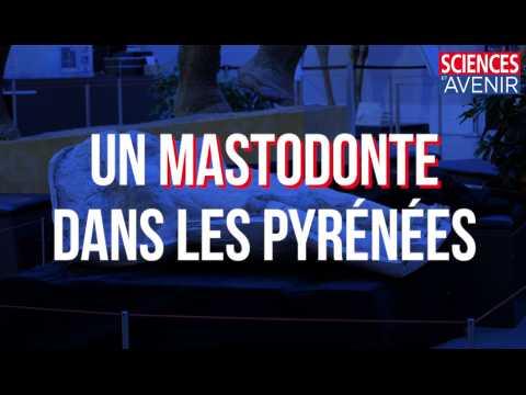 Exceptionnel : découverte du premier crâne de mastodonte des Pyrénées