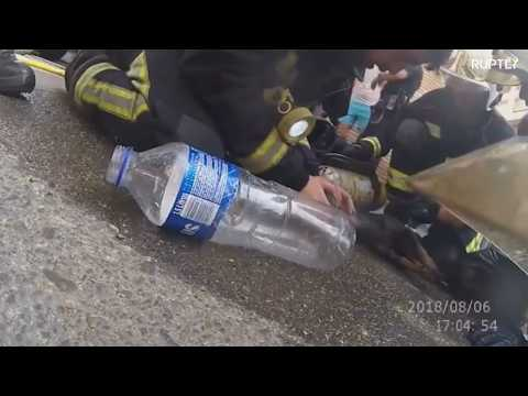 Spanish firefighters rescue tiny pup from burning building