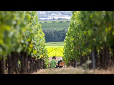 Great Vineyards To Visit