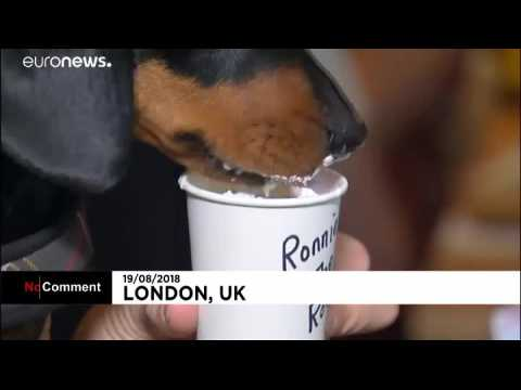 Watch: Pop-up Dachshund dog cafe in London