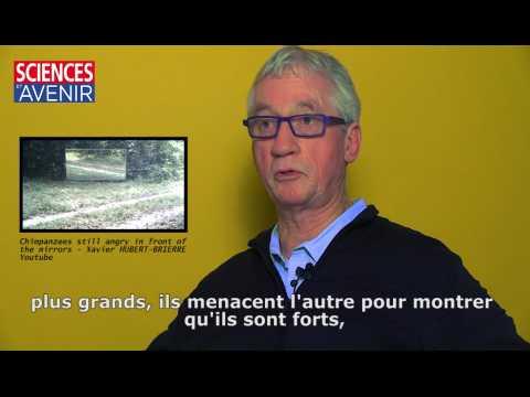Les émotions des animaux, entretien avec Frans de Waal