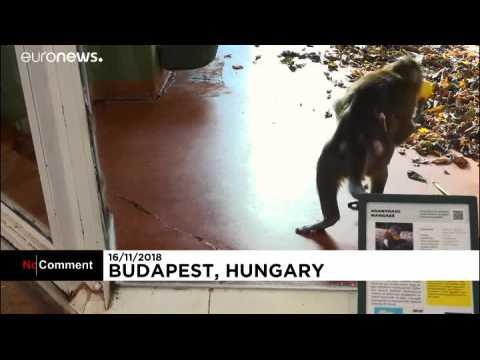 Une naissance rare au zoo de Budapest