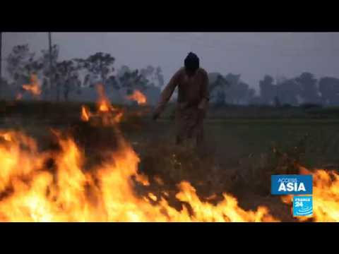 Crop burning crisis: India chokes as farmers set fields on fire
