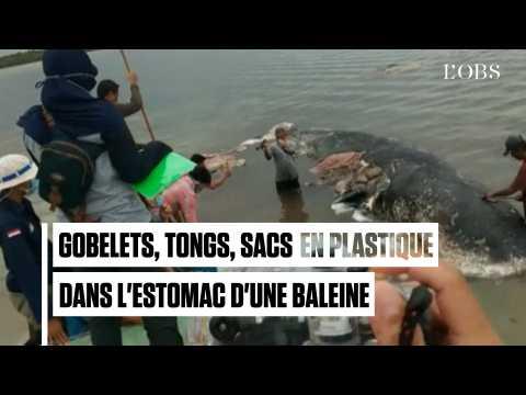 Six kilos de plastique retrouvés dans l'estomac de cette baleine morte