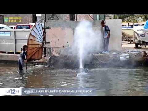 Marseille : une baleine dans le Vieux-Port ! - ZAPPING ACTU DU 19/10/2017