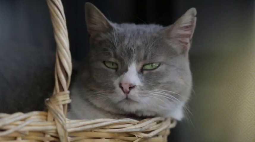 Kedi - Des chats et des hommes - Bande annonce 1 - VF - (2016)