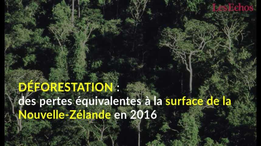 Illustration pour la vidéo Déforestation : des pertes équivalentes à la surface de la Nouvelle-Zélande en 2016
