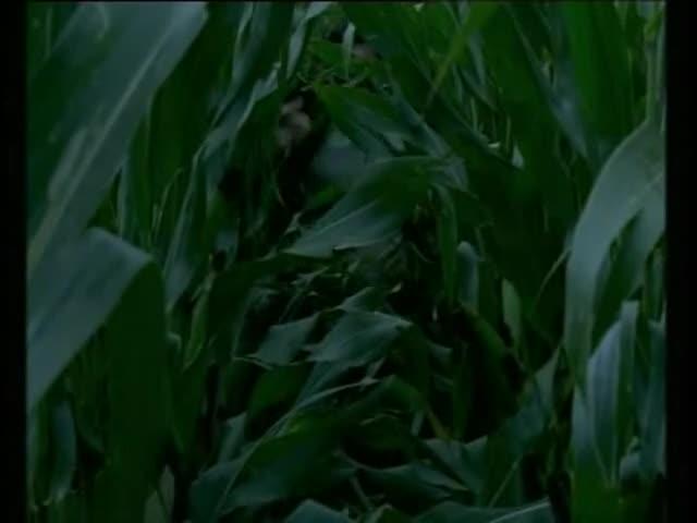 Marie et le loup - bande annonce - (2004)