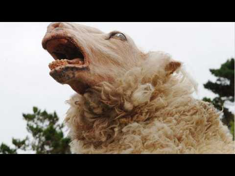 Black Sheep - Bande annonce 3 - VO - (2006)