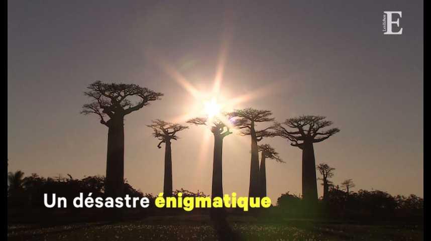 Illustration pour la vidéo Madagascar, l'invraisemblable désastre économique