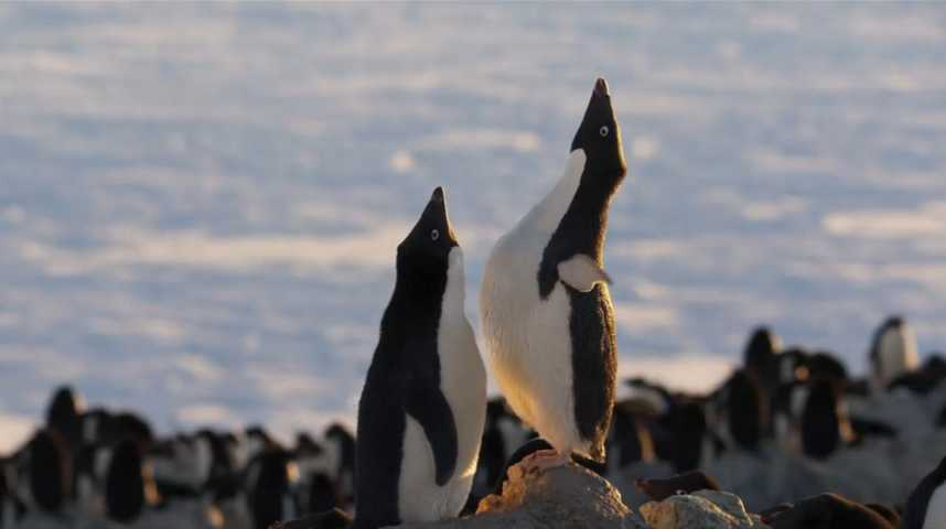 Penguins - Bande annonce 1 - VO - (2019)