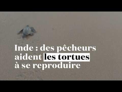 Inde : des pêcheurs aident les tortues menacées à se reproduire