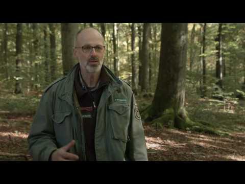 """Bande-annonce """"L'intelligence des arbres"""""""