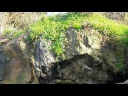 Filtraciones de un pozo negro al mar en la Playa de Estaño