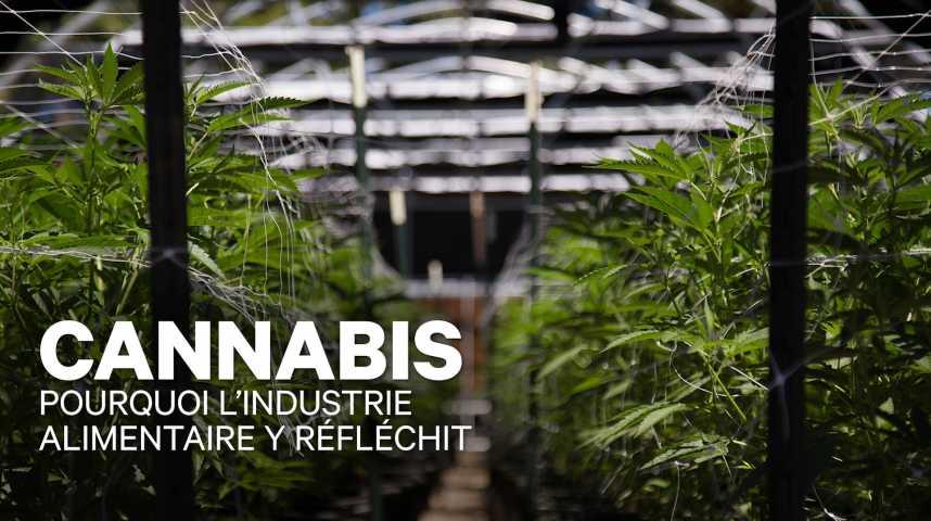 Illustration pour la vidéo Le Cannabis interpelle les grands groupes alimentaires