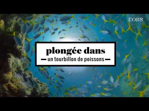 2 minutes d'un tourbillon de poissons au coeur de la grande barrière de corail