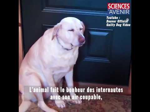 Bande-annonce : l'intelligence des animaux domestiques