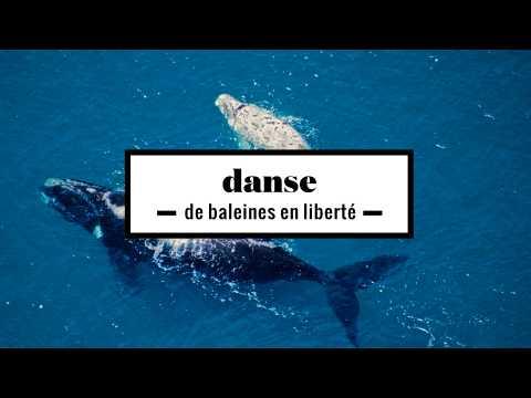 2 minutes d'une danse de baleines en liberté