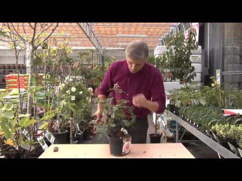 balcon mi ombre mi soleil le bon choix des plantes sur orange vid os. Black Bedroom Furniture Sets. Home Design Ideas