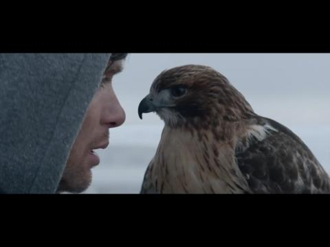 A Spectacular Scene of Falconry From 'Aloft'