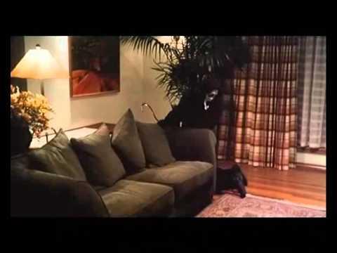 ghost bastards bande annonce vf sur orange vid os. Black Bedroom Furniture Sets. Home Design Ideas