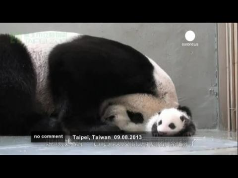 Baby panda meets her mother in Taipei zoo